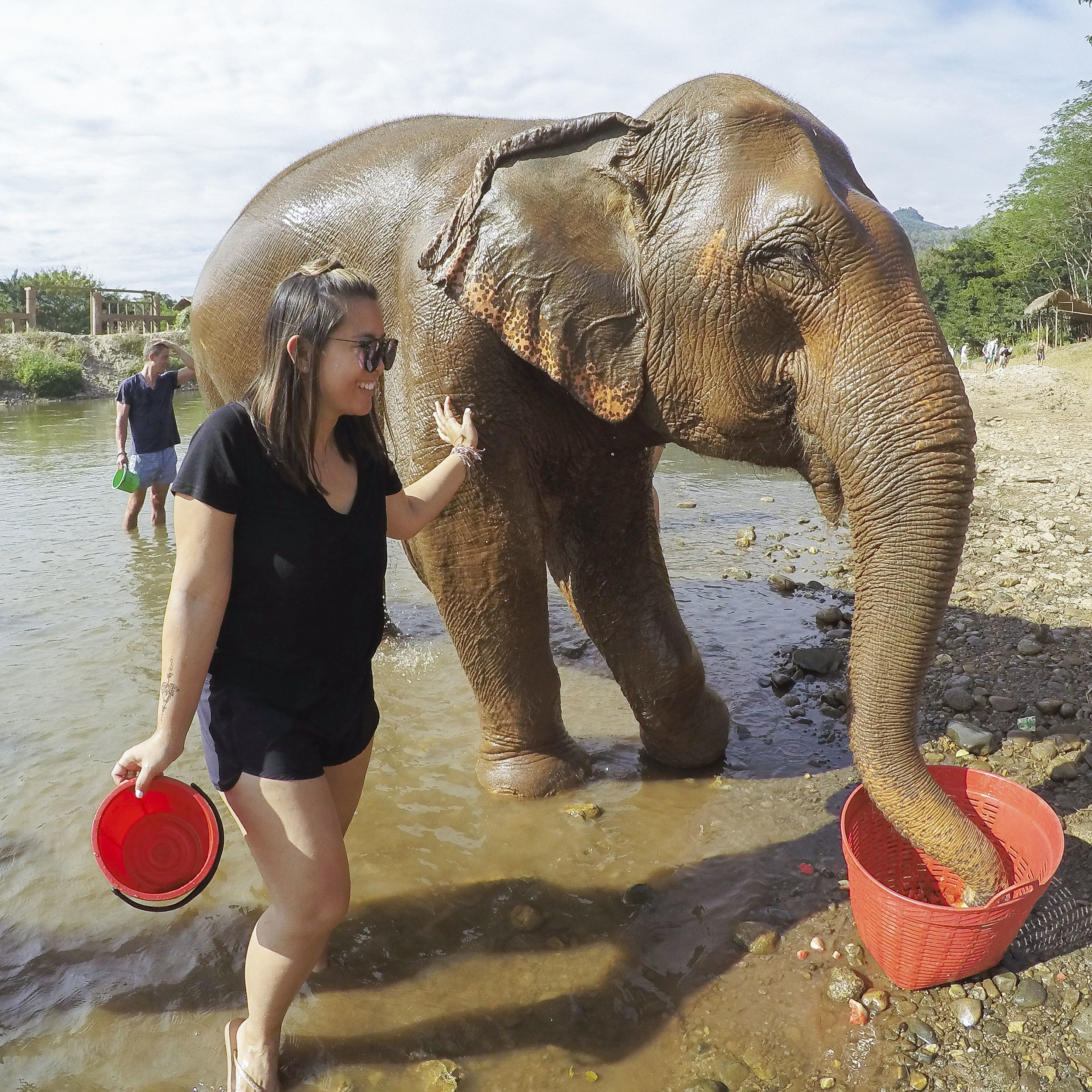 Spending a Day at the Elephant Nature Park - Shannon Did What?
