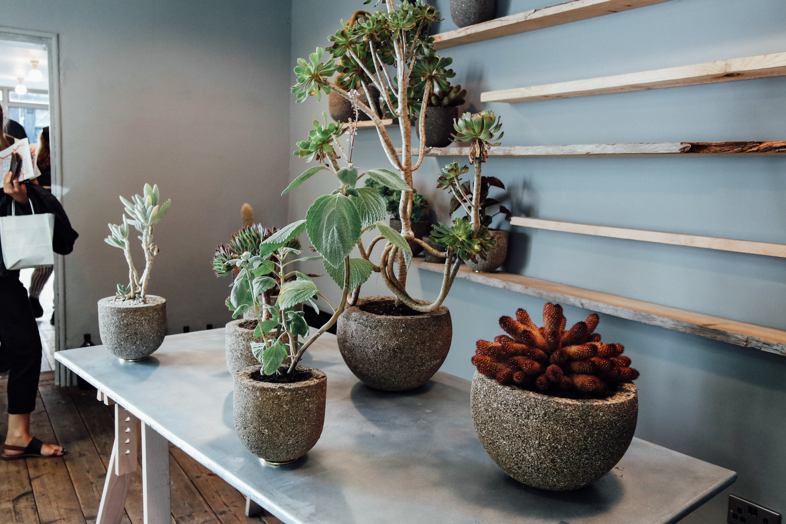 Plants at Aesop