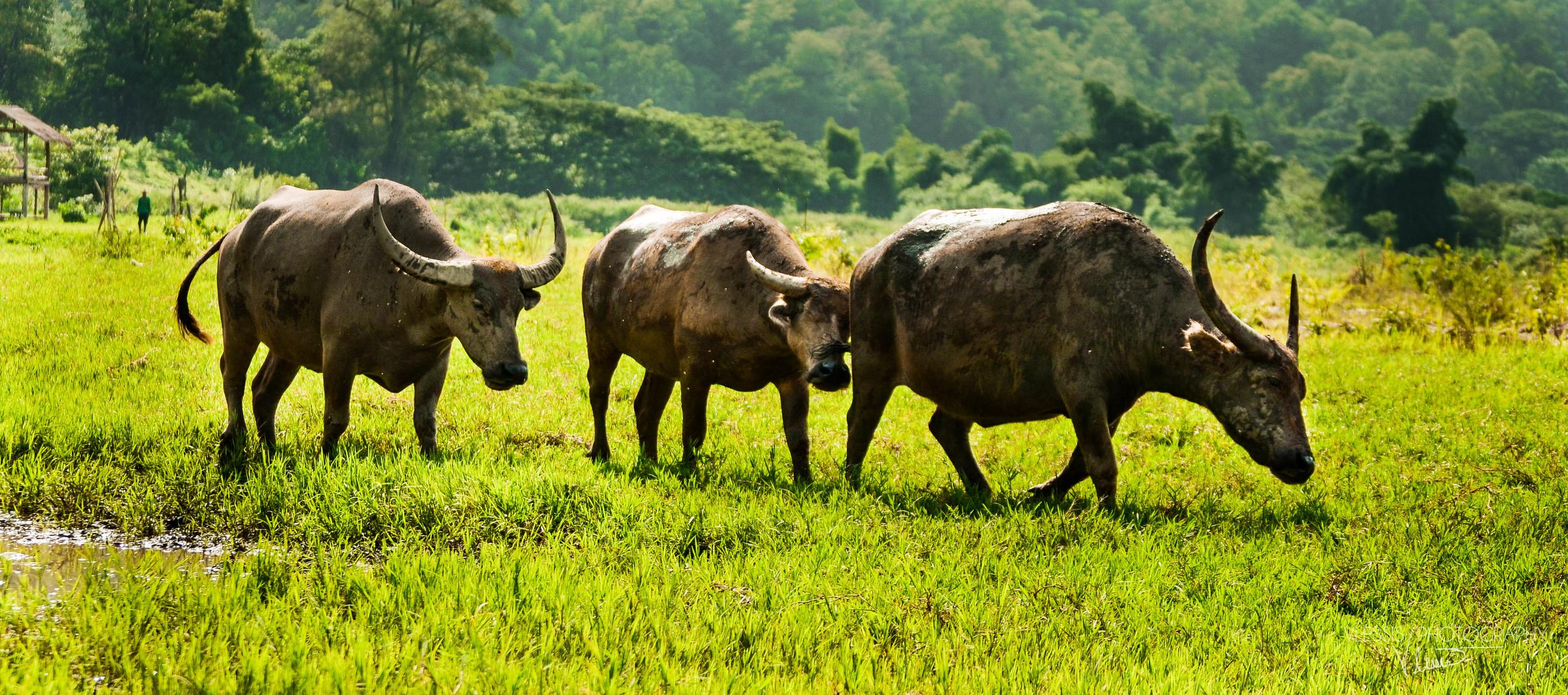 Thailand (1 of 1)-10.jpg