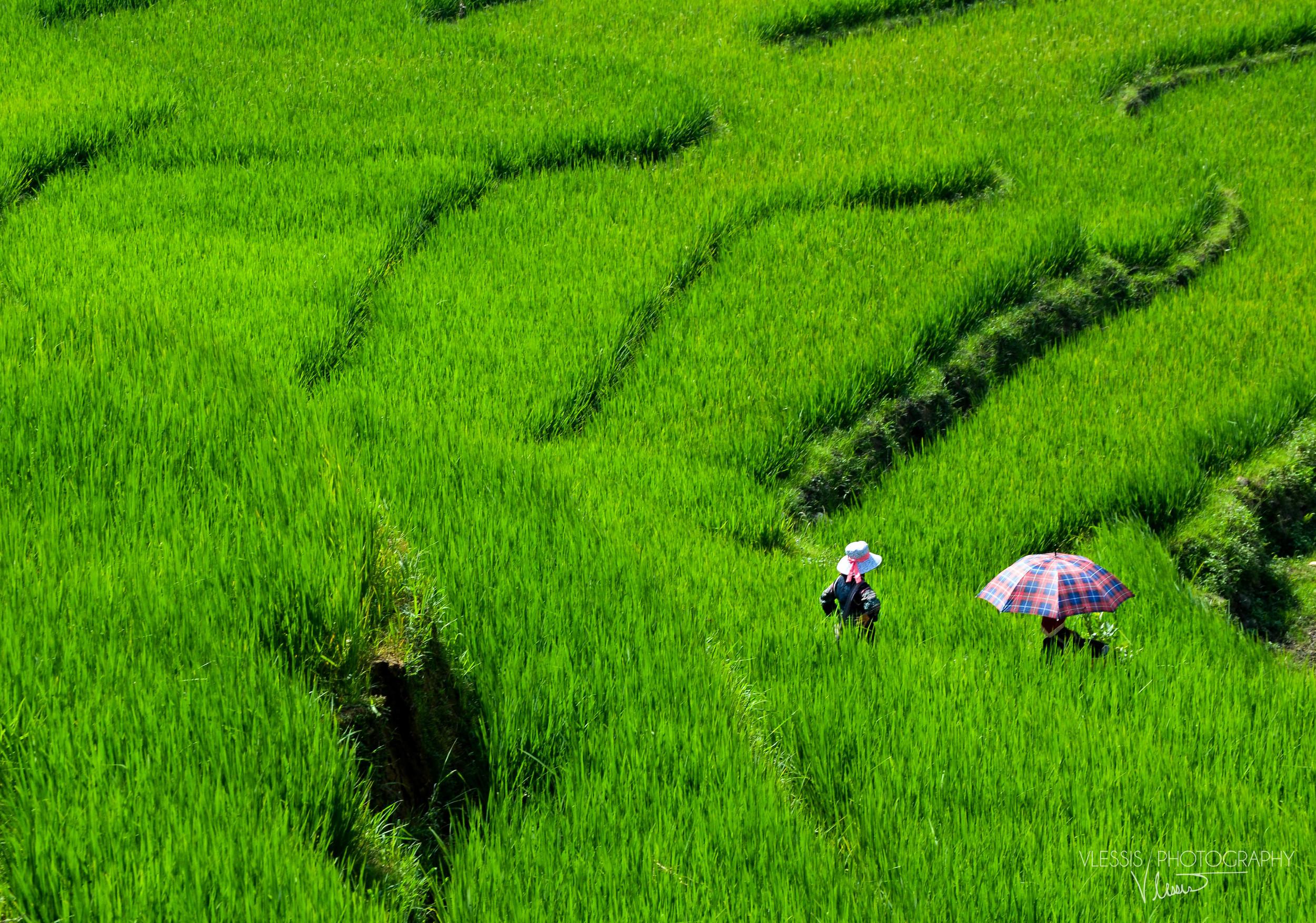 Vietnam (1 of 1)-4.jpg