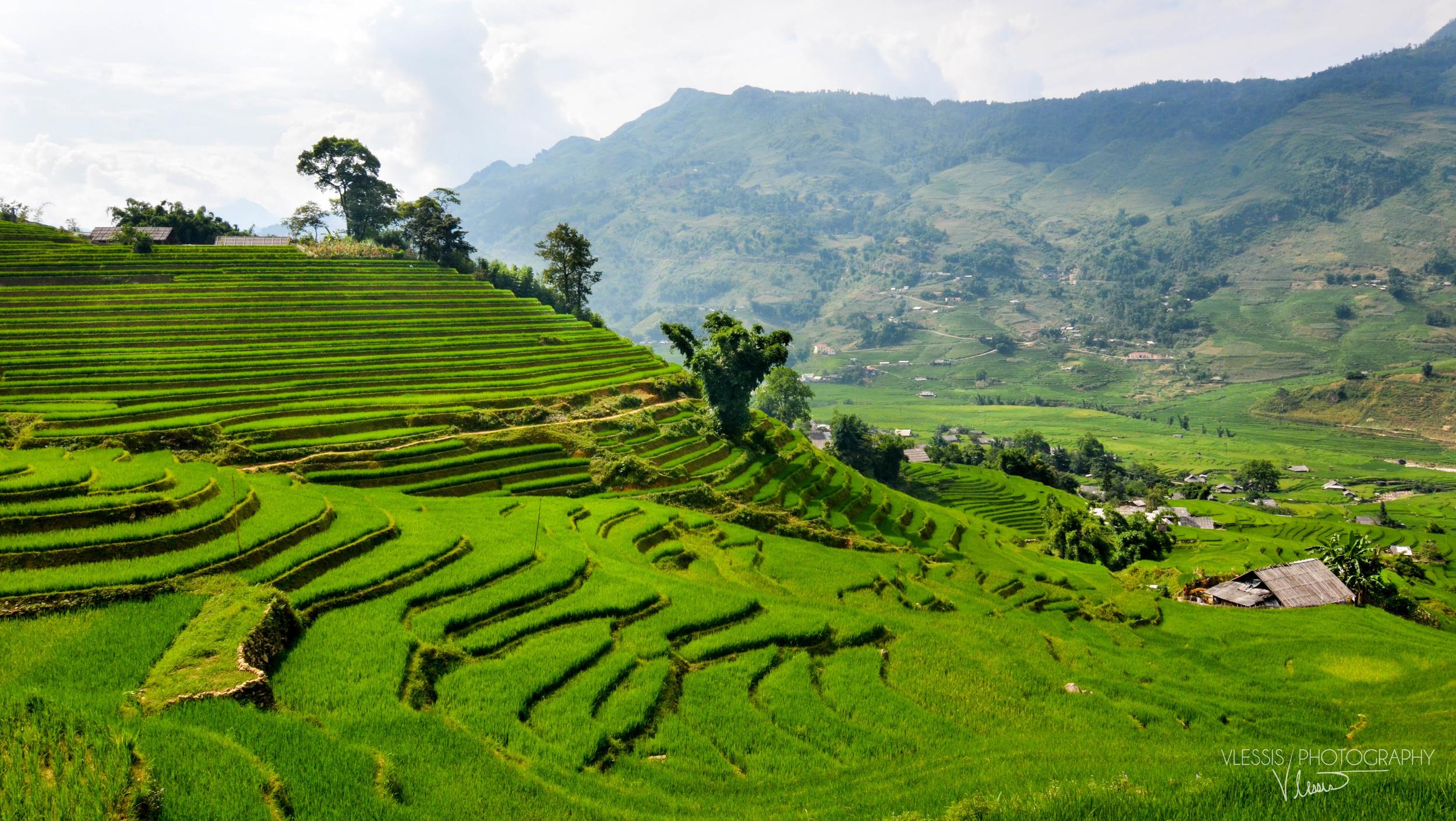 Vietnam (1 of 1)-5.jpg