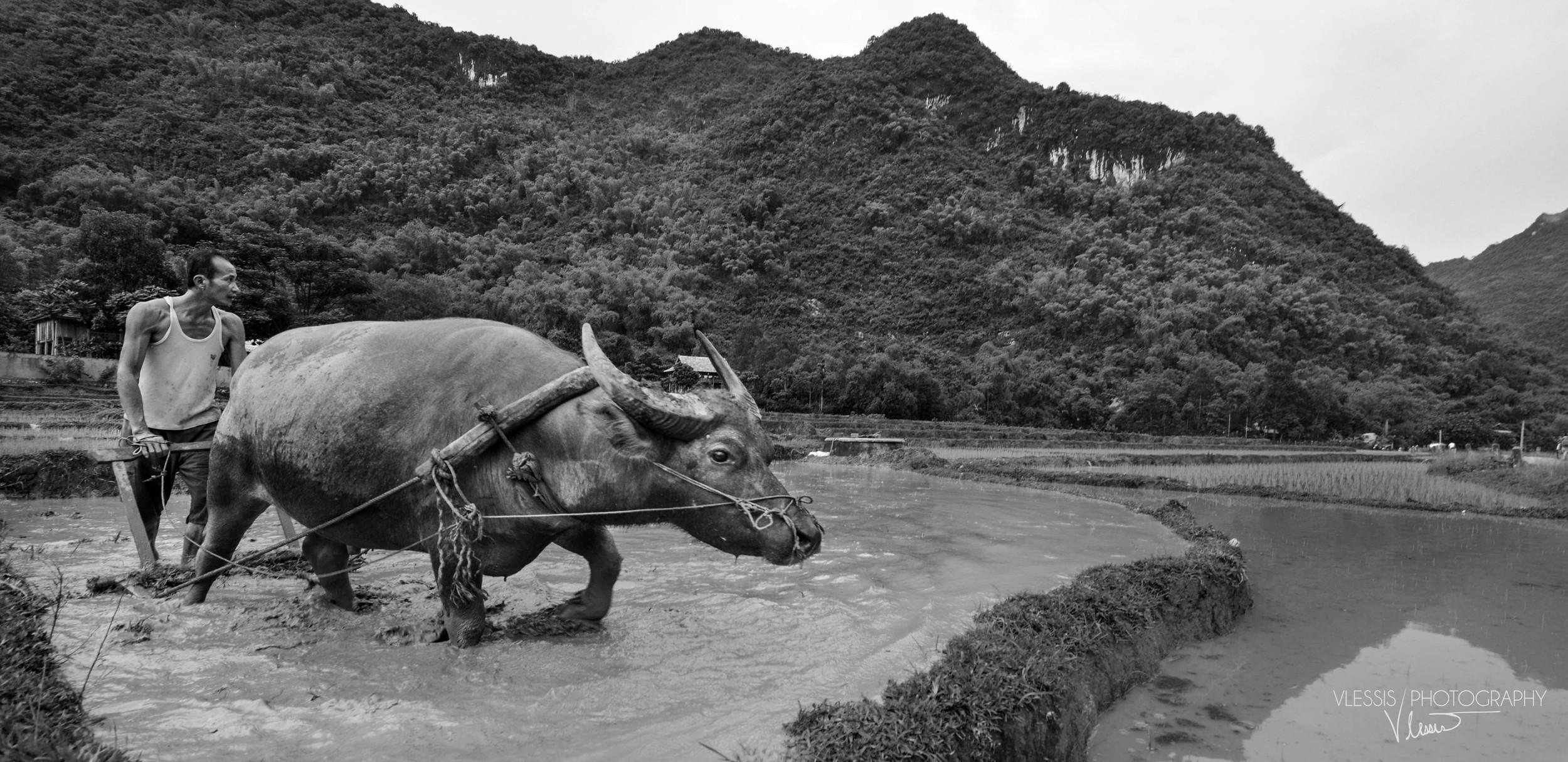 Vietnam (1 of 1)-15.jpg