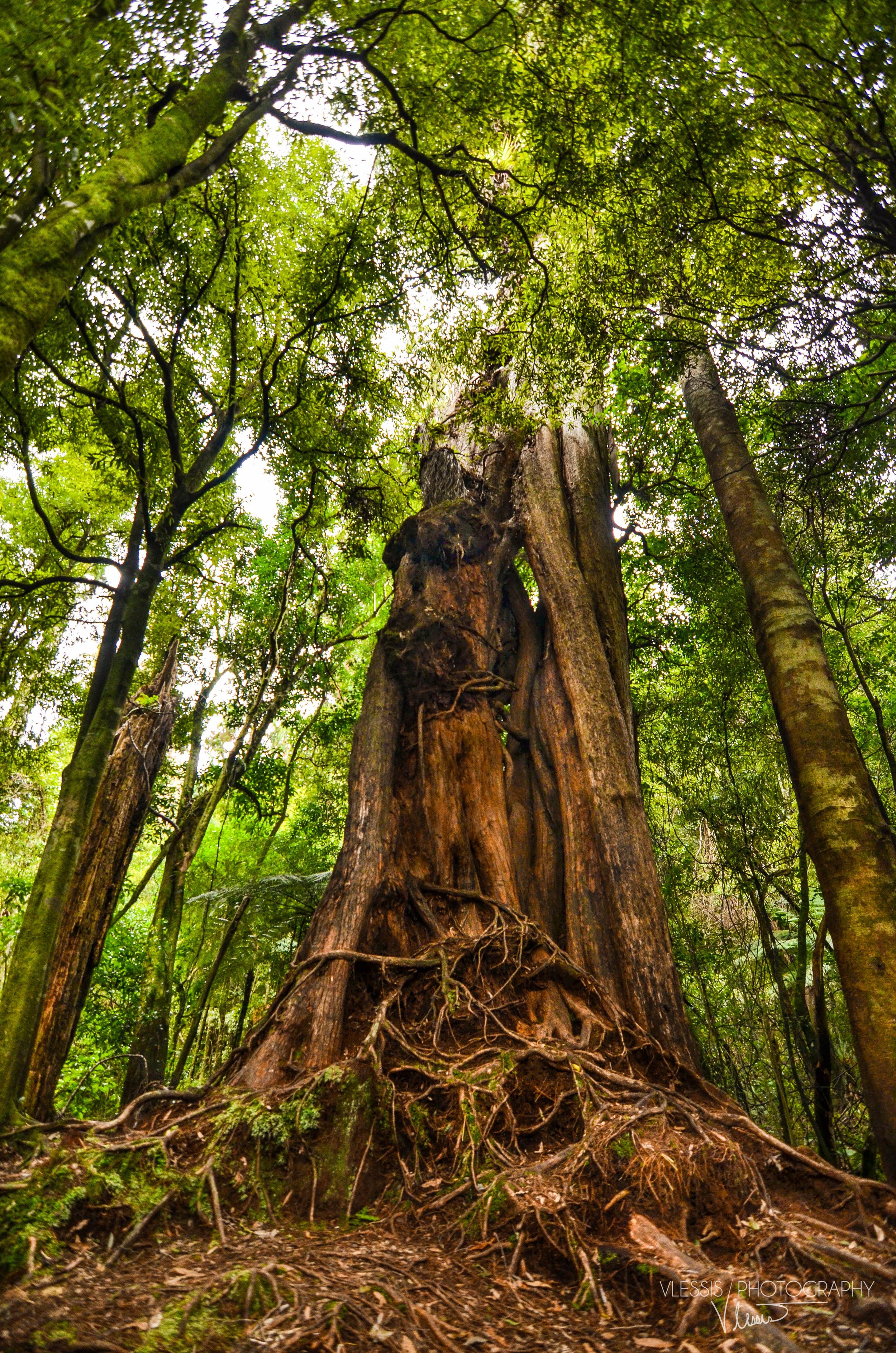 Tall Woods II