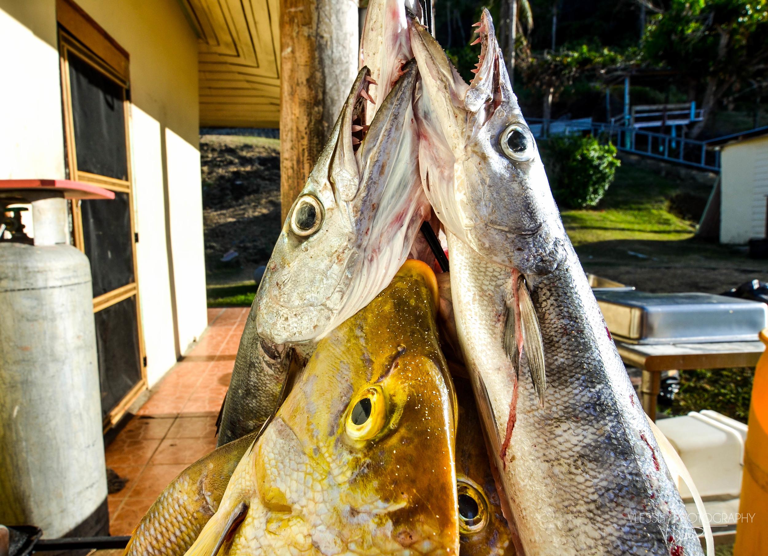 Fiji (1 of 1) copy 2.jpg
