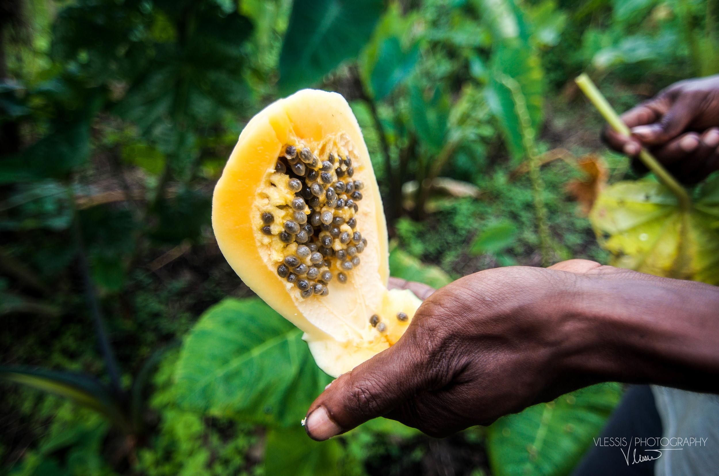 Vanuatupopo (1 of 1).jpg