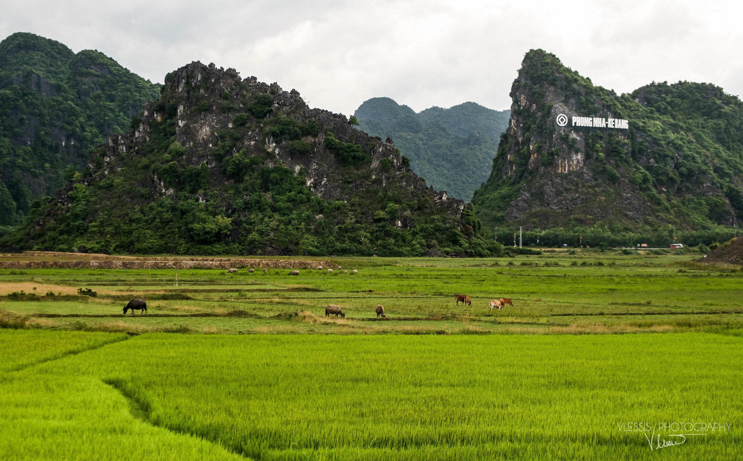Vietnamphongnha (1 of 1).jpg