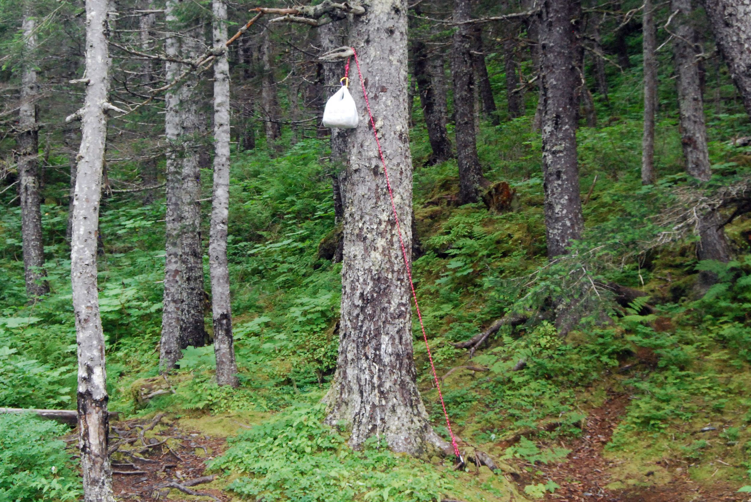 The entire Alaska is bear country. I haven't seen any, but that doesn't mean they are not around. I am particularly proud of my hanging of the food.
