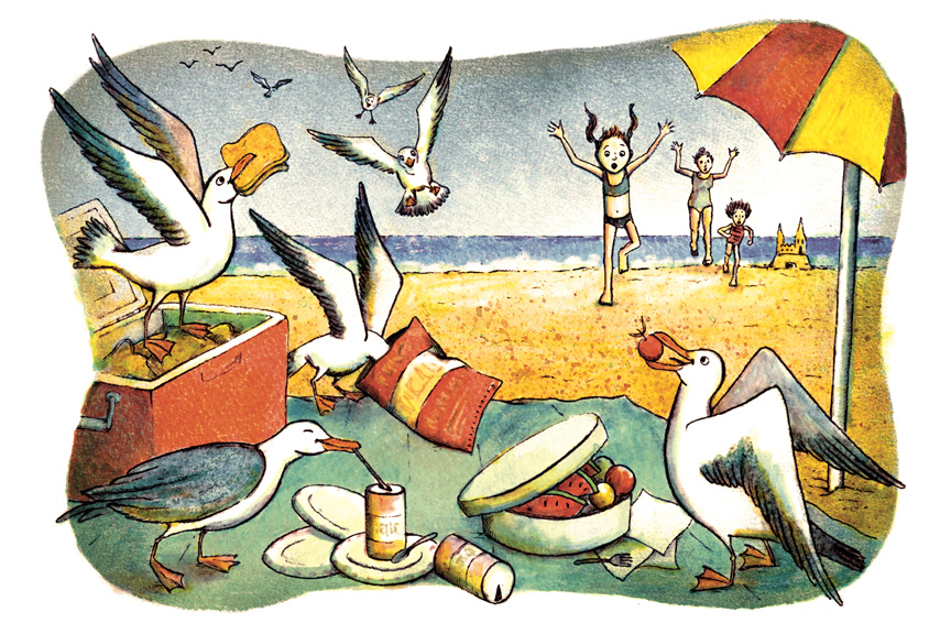 Seagull Picnic