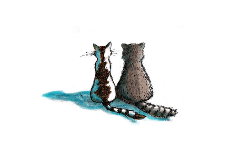 Copy of Copy of Cat & Racoon 2