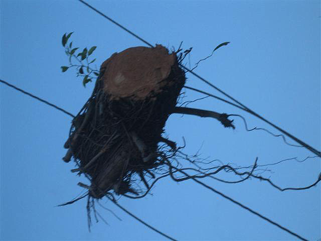 """Branch on Cable (Miami, FL.), 2008. From the series """"Found Objects""""."""