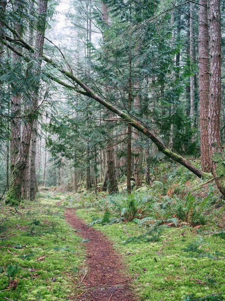 Velvet woods