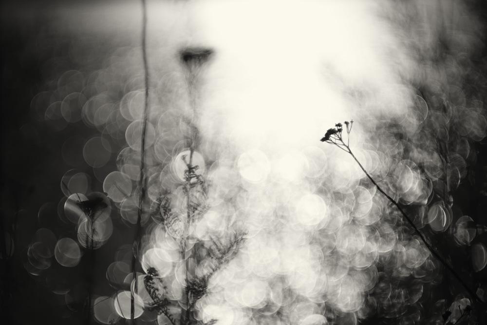 Weeds monochrome #1