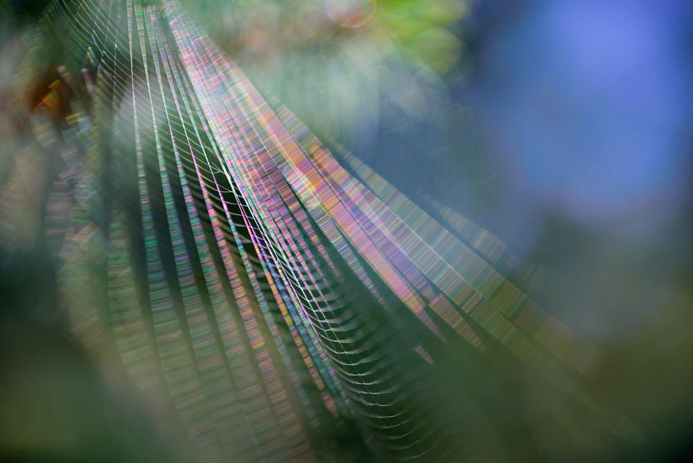 Web diffraction