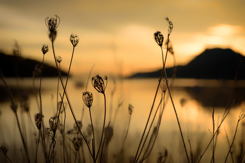 Winter dawn, Port Browning