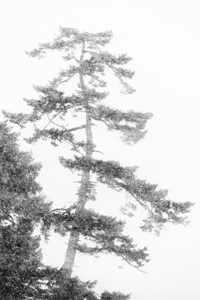 tree in snow