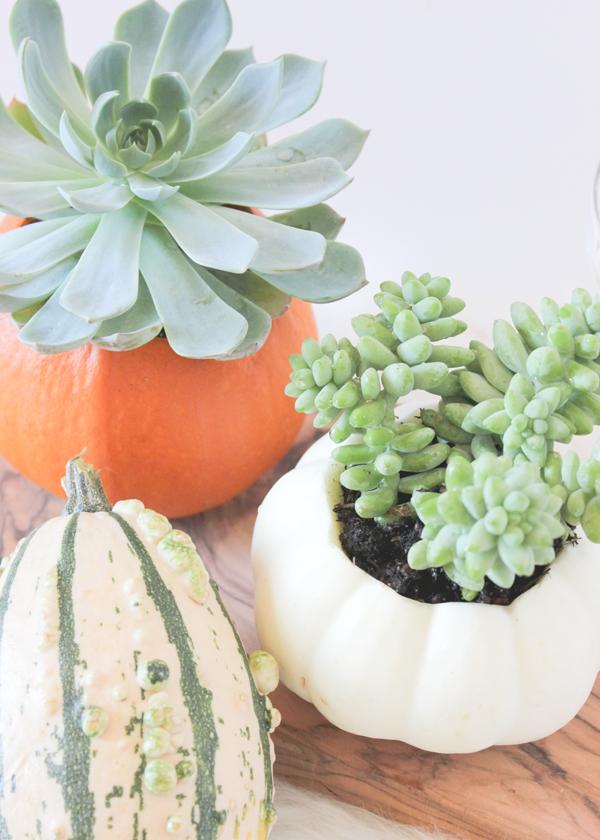 pumpkin-succulent-vase-diy-4.png