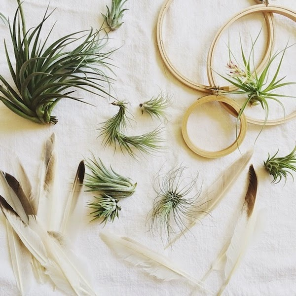 air-plant-supplies-diy.png