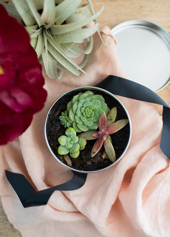 Succulent Hostess Gift