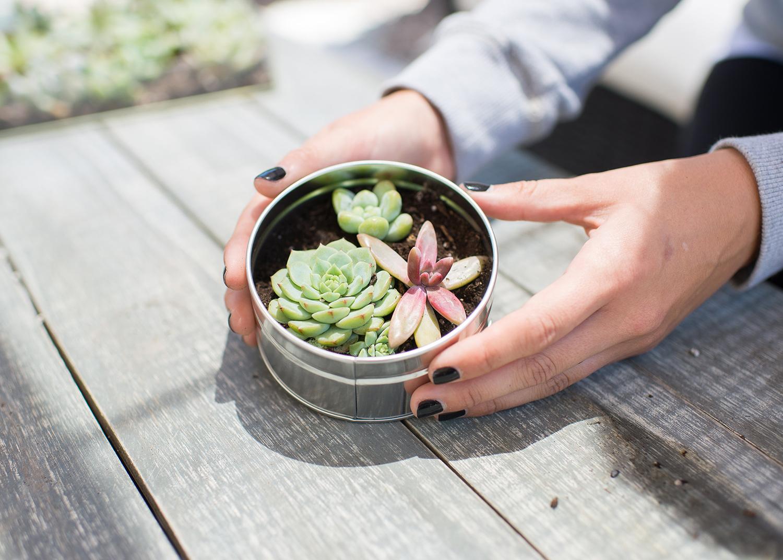 DIY succulent tin
