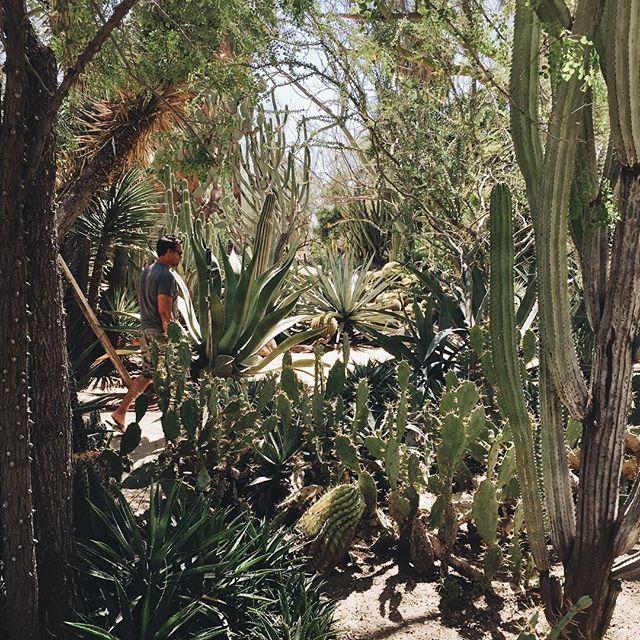 cactus garden.jpg