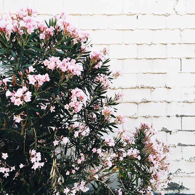 Pink flower wall in Palm Springs | A Fabulous Fete