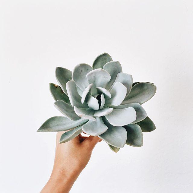 oversized succulent.jpg