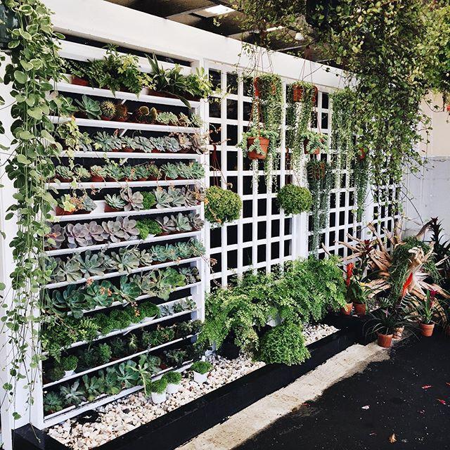 succulent wall.jpg