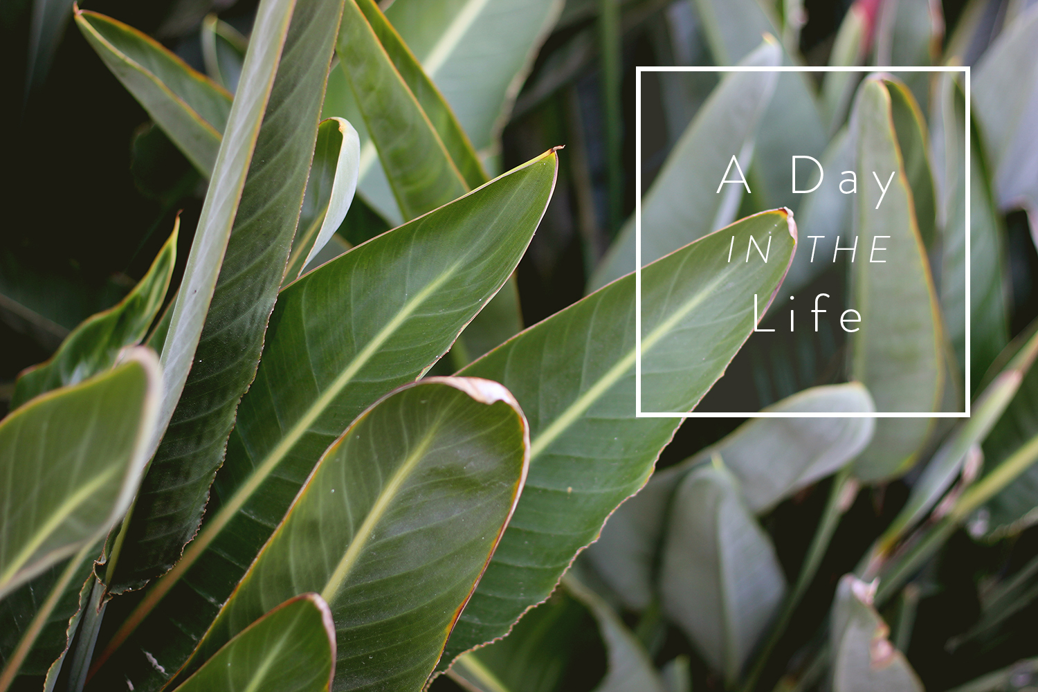A day in the life | A Fabulous Fete