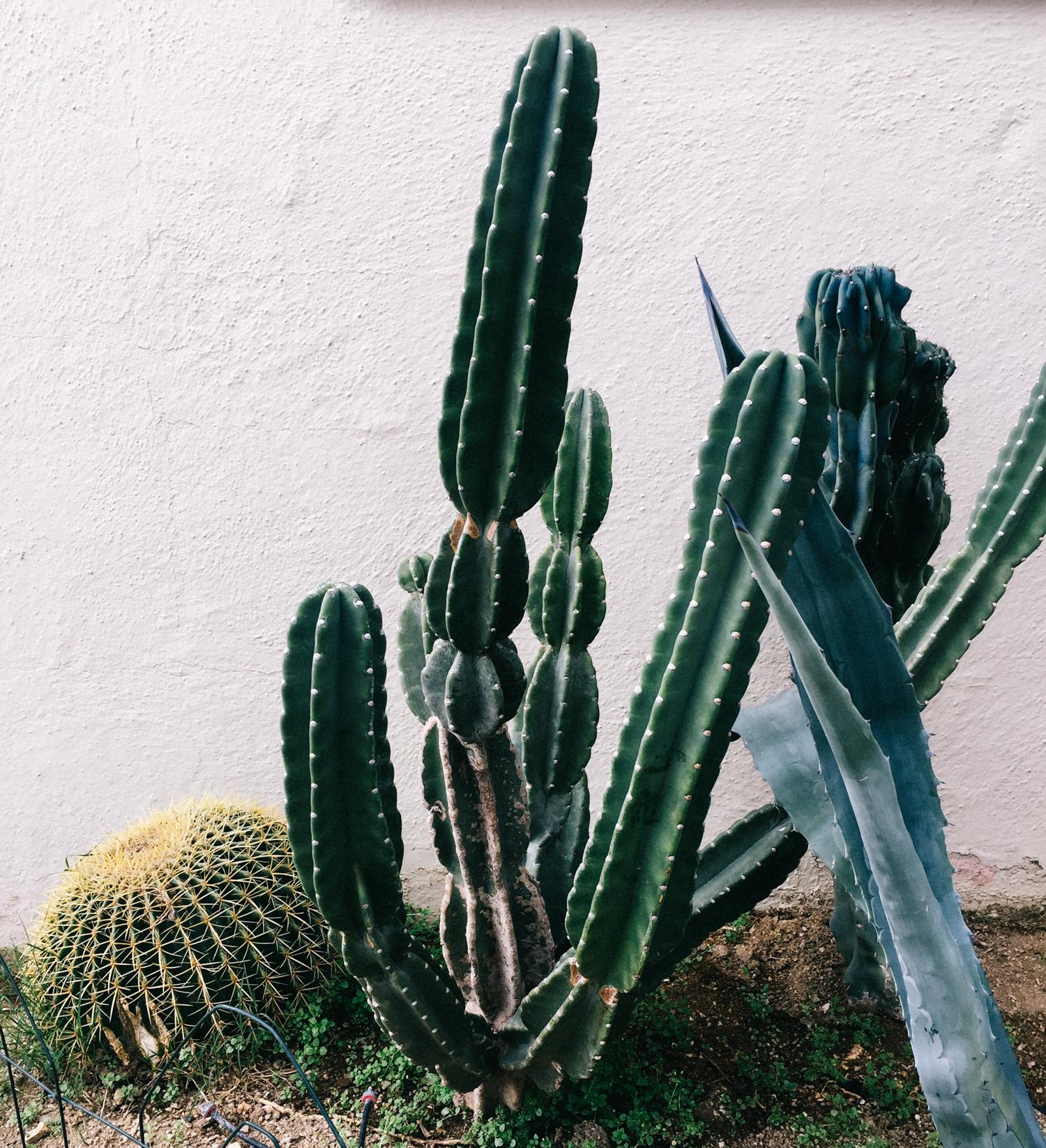 mini cactus garden | A Fabulous Fete