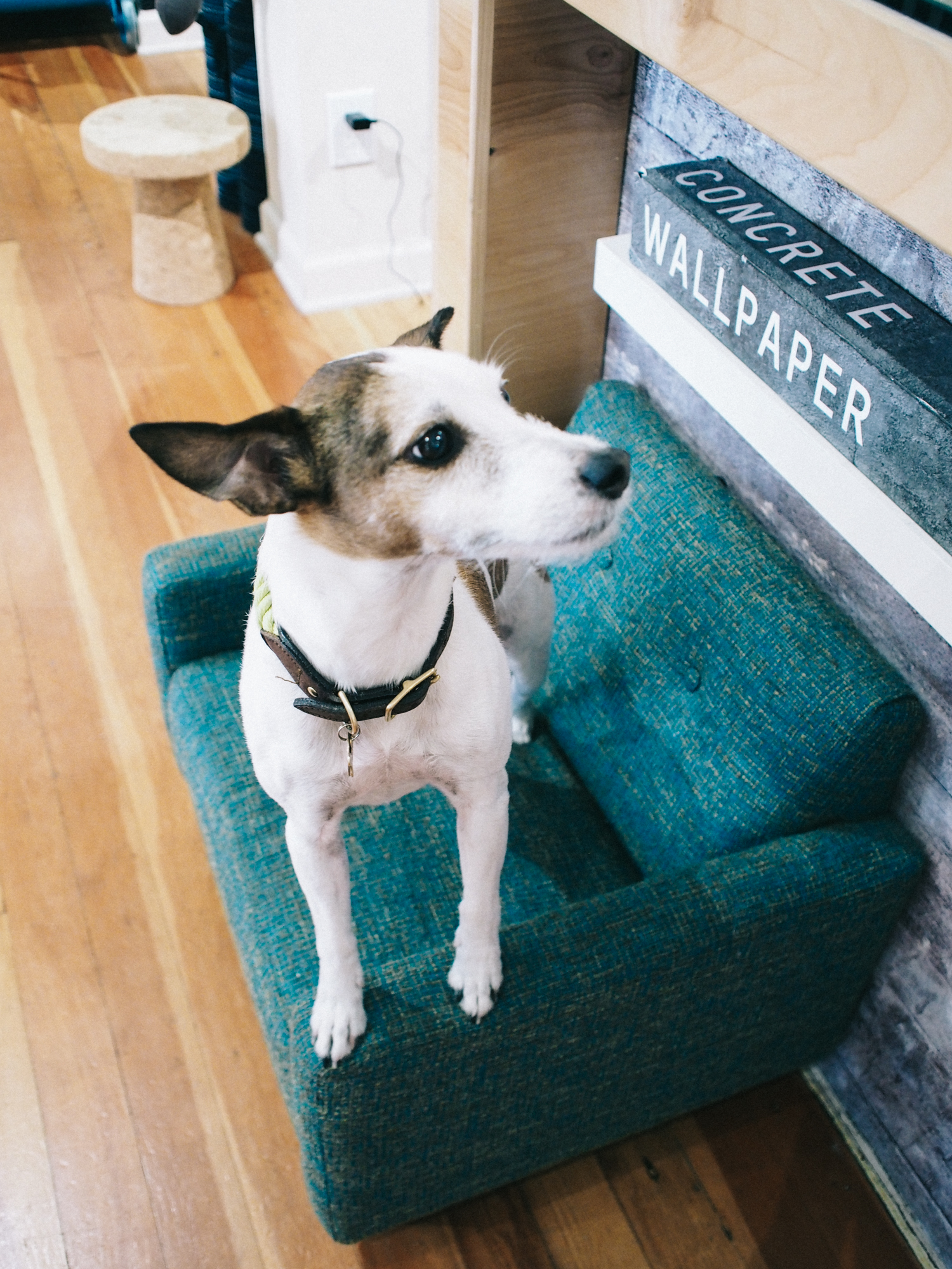 Shop dog at Vertigo Home, Laguna Beach | A Fabulous Fete