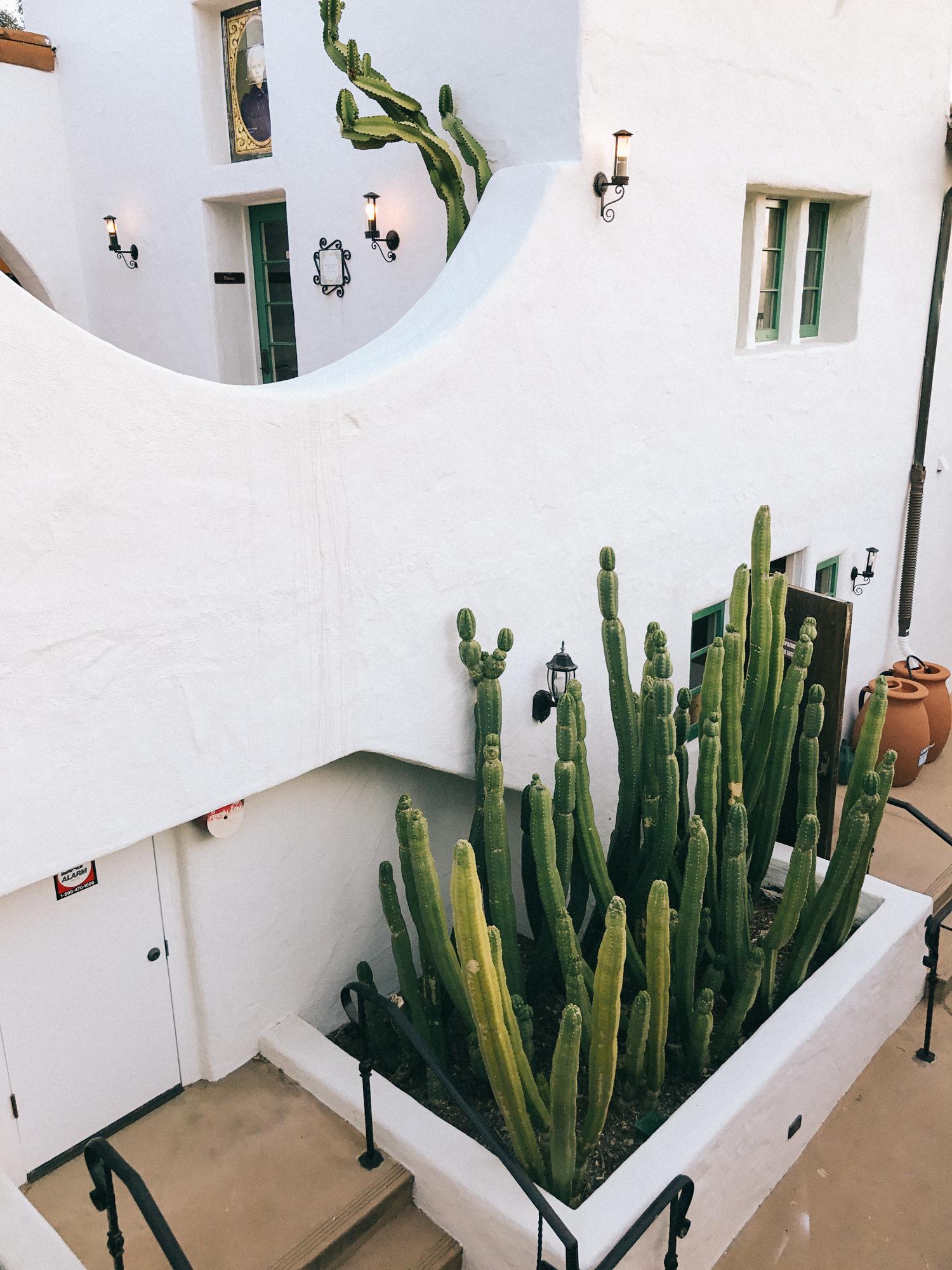 Cactus garden | A Fabulous Fete