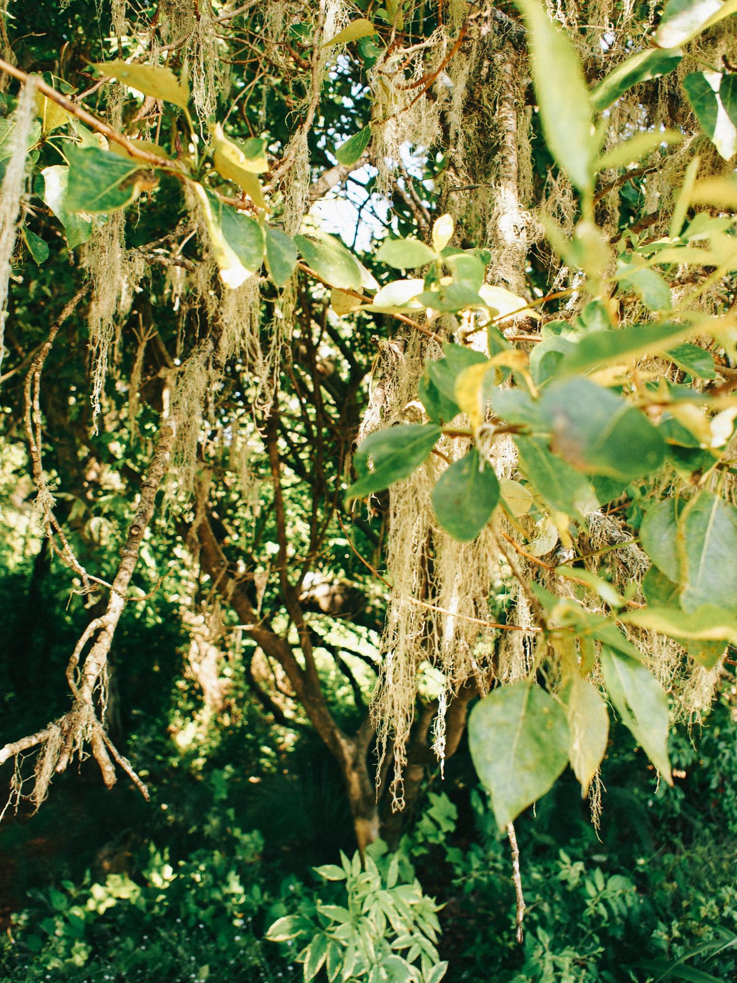 Tree moss in a secret garden | A Fabulous Fete