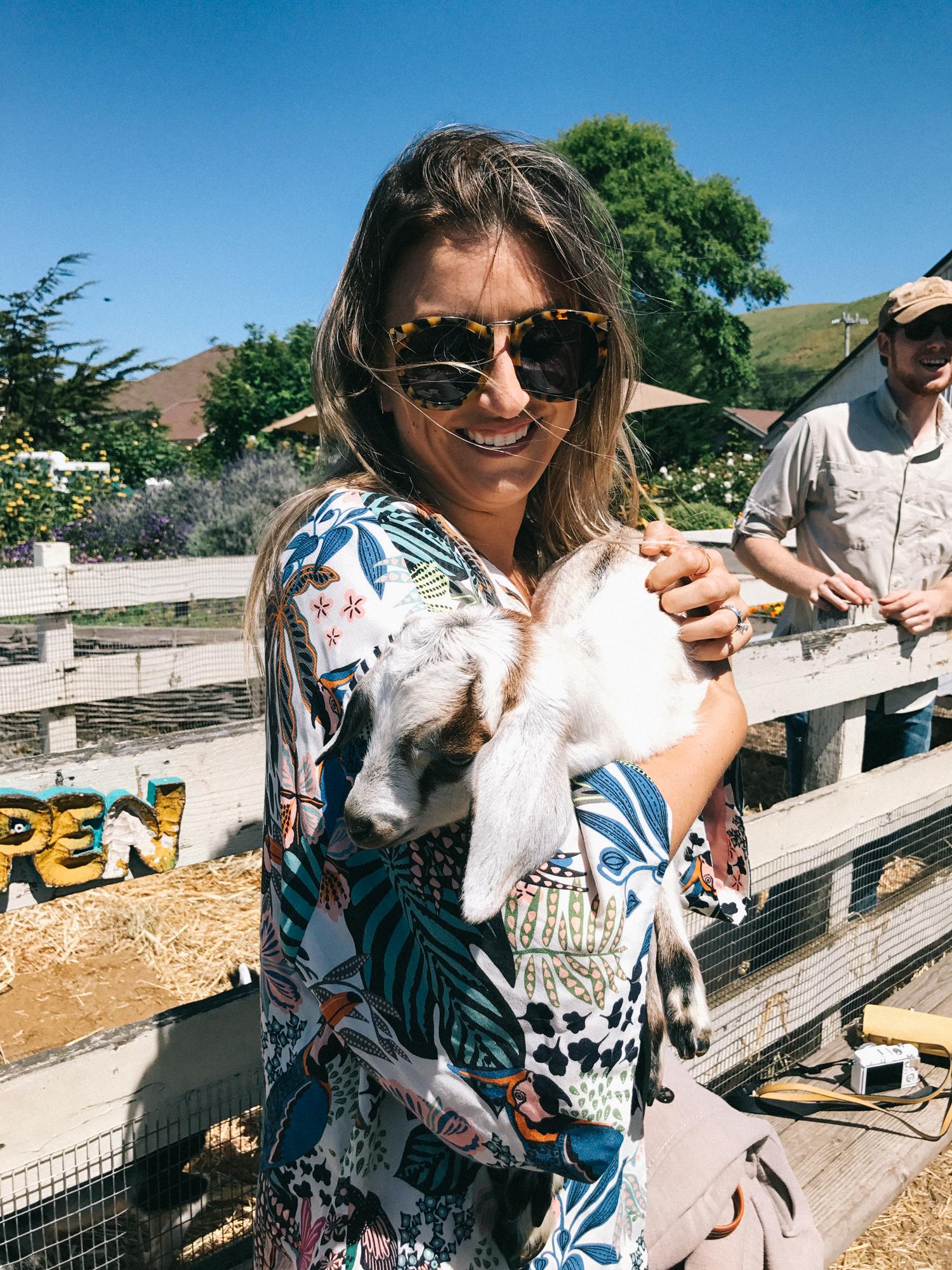 goat farm visit in half moon bay | A Fabulous Fete