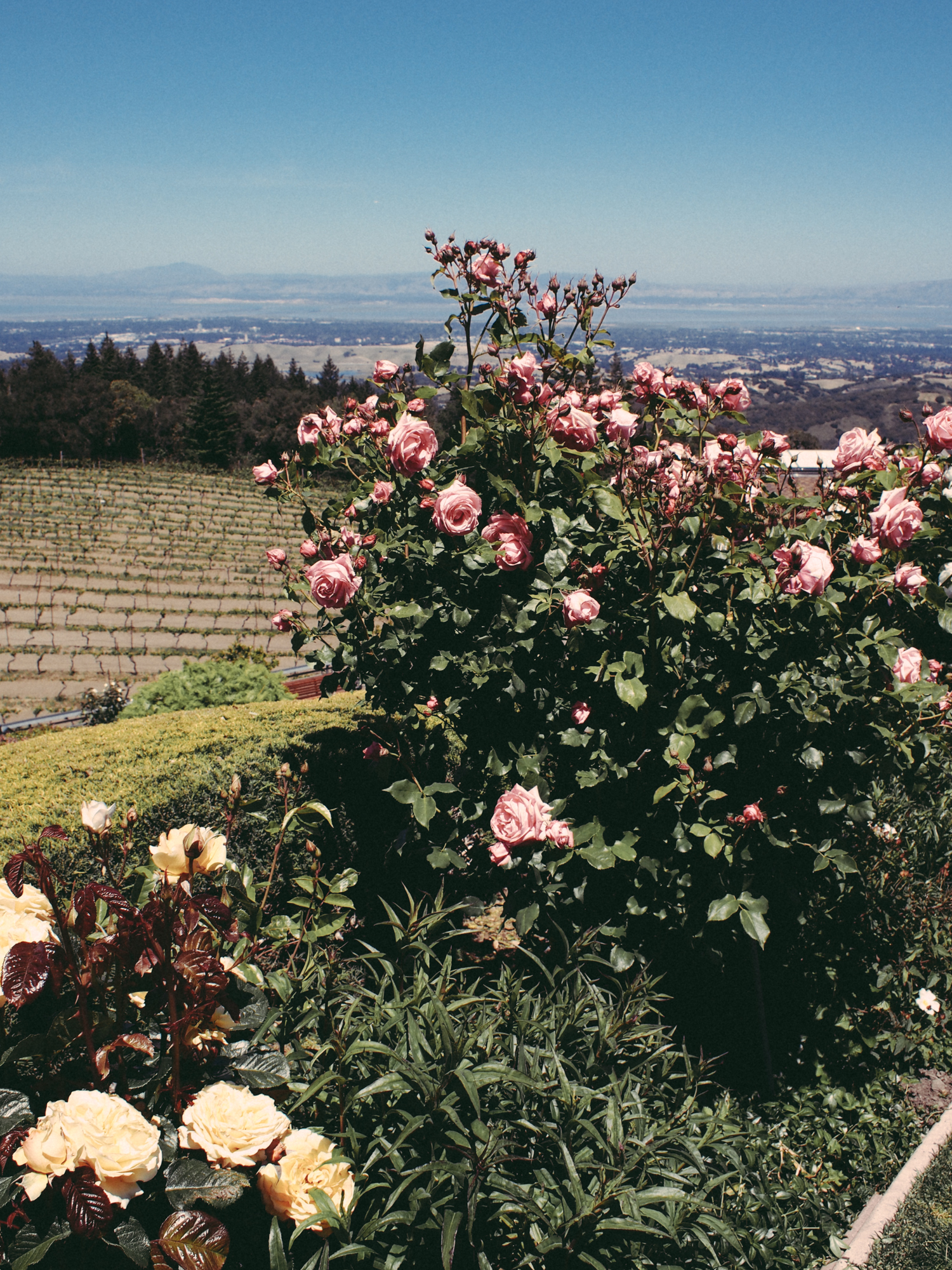 Stunning views with even more stunning gardens at this winery | A Fabulous Fete