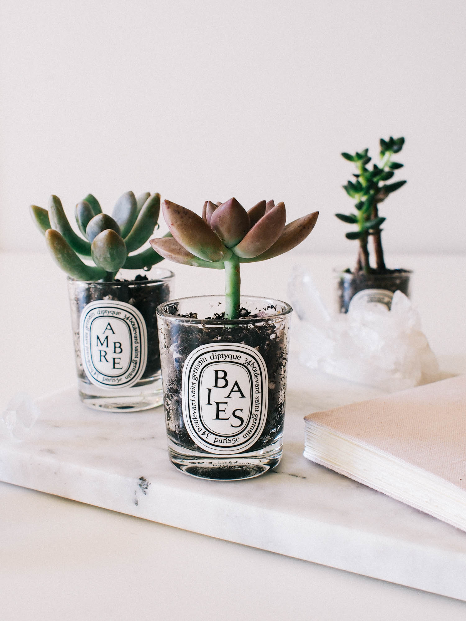 DIY Succulents | A Fabulous Fete
