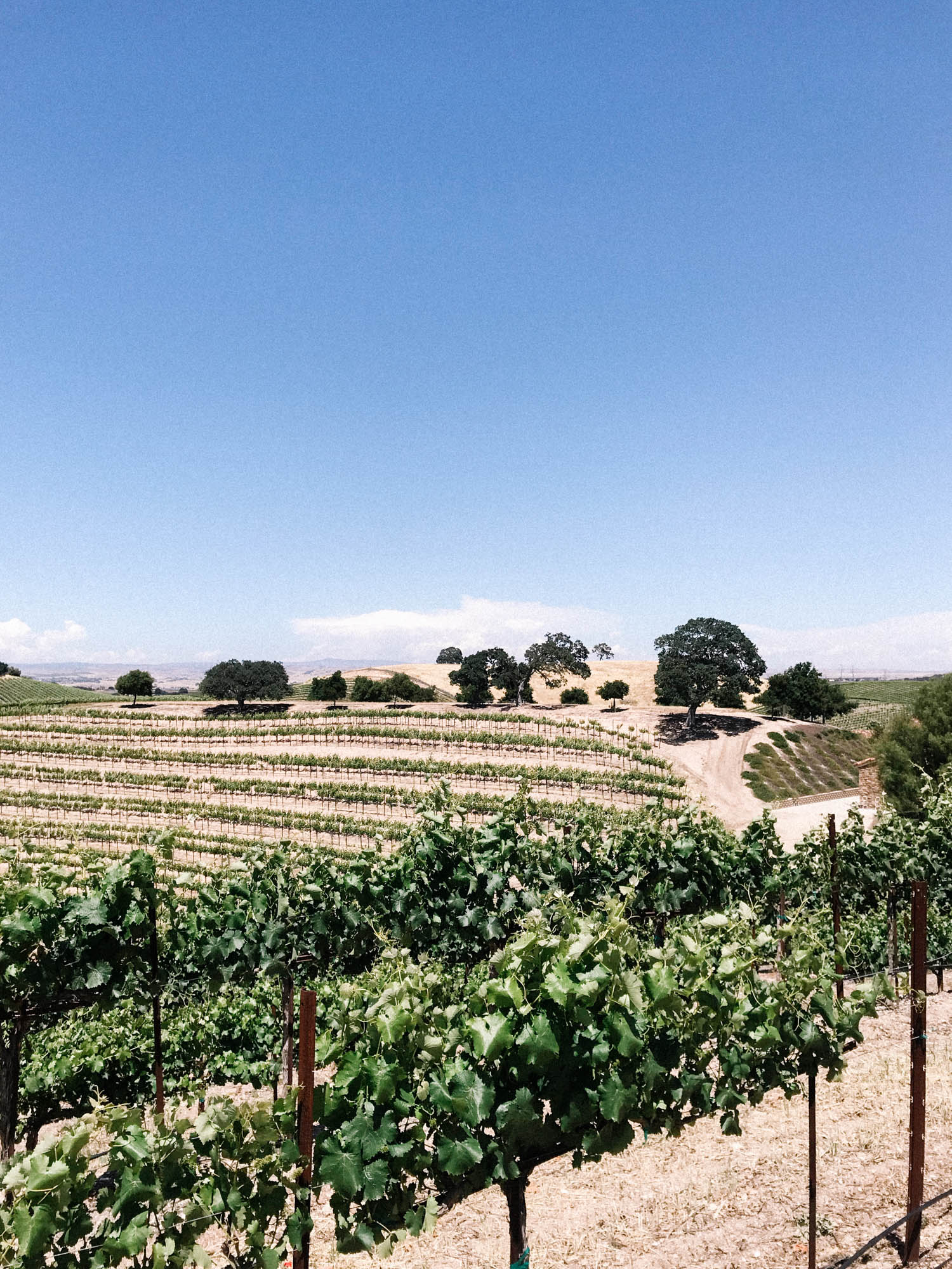 Wine Tasting In Paso Robles || A Fabulous Fete