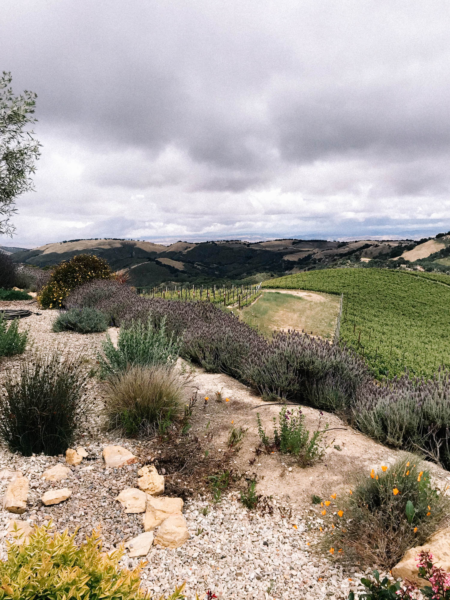 The Perfect Itinerary For Wine Tasting Paso Robles || A Fabulous Fete