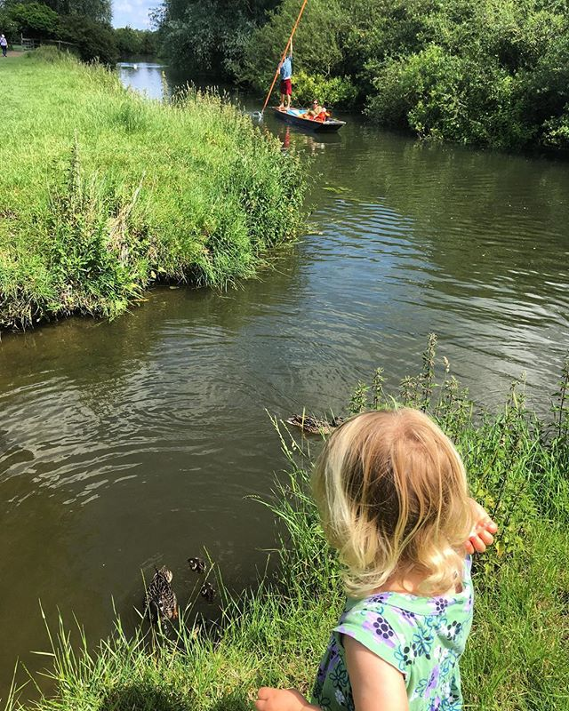 Another beautiful day for picnics in the meadows. The punts floating by and 5 baby ducklings to feed. #cambridgeshire