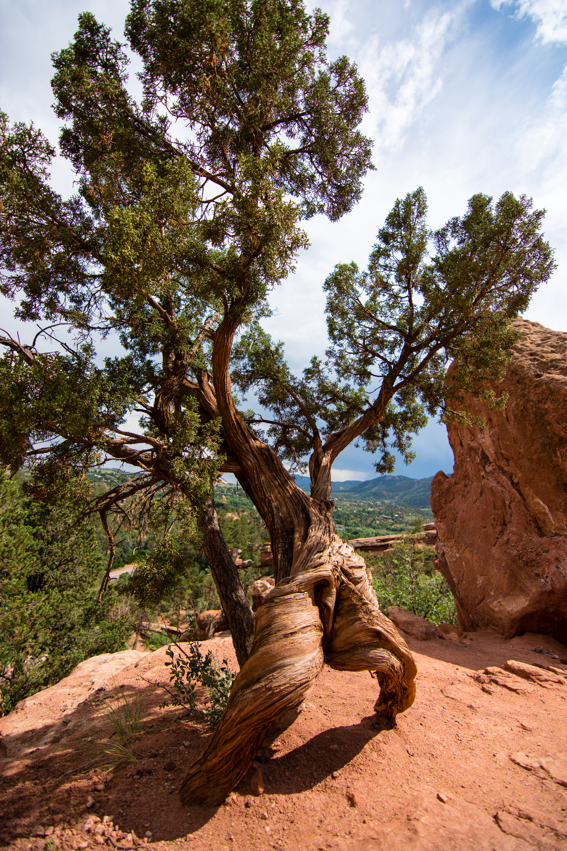 Breakdancing Tree in the Garden of the Gods
