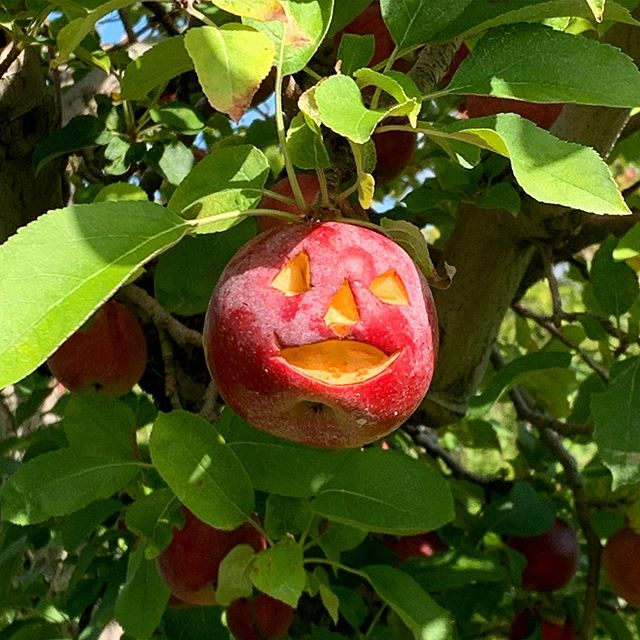 Found while apple picking. This spooky little guy was waiting out for us in the field! We left him on the tree for other people to discover 🍎🎃