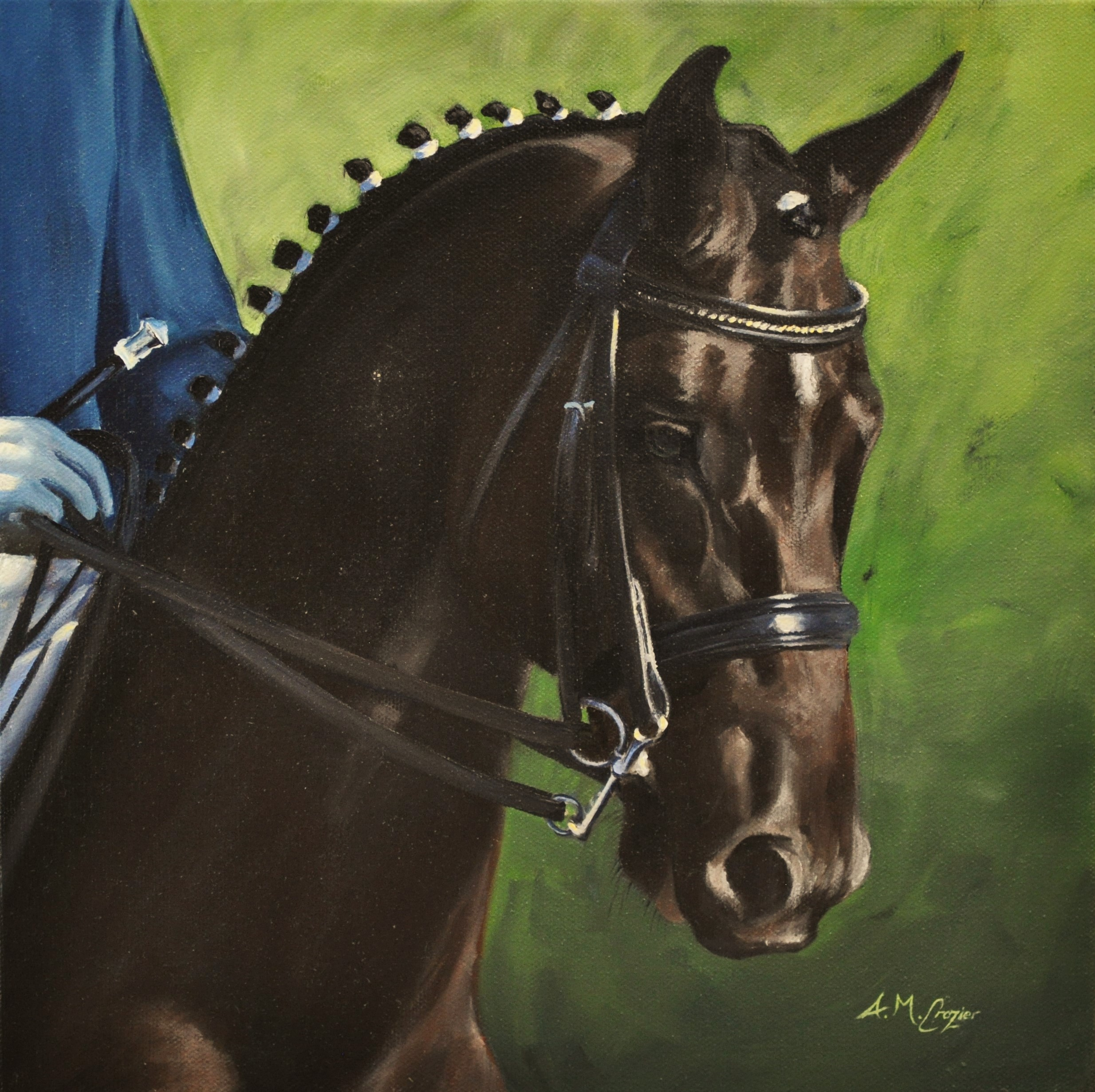 Celle Stallion