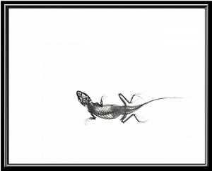 Lizard With a Broken Leg: the Xray that started it all.