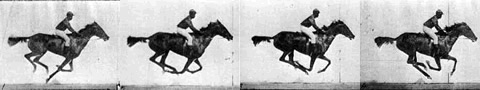 Sequential images of the same galloping horse showing the rapid succession of captured images