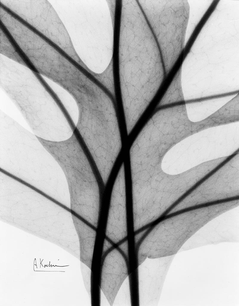 Leaves X2