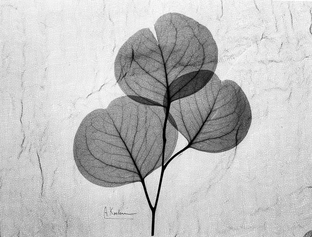 Eucalyptus Leaves with Textile X7