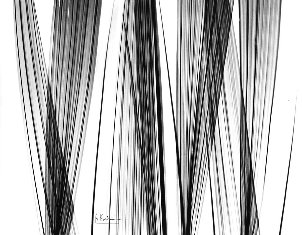 Rhapis Palm Leaves X12