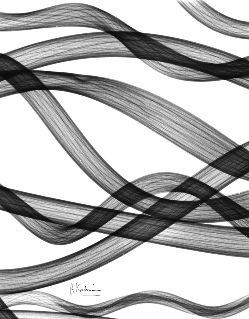 Untitled (Seaweed) X28
