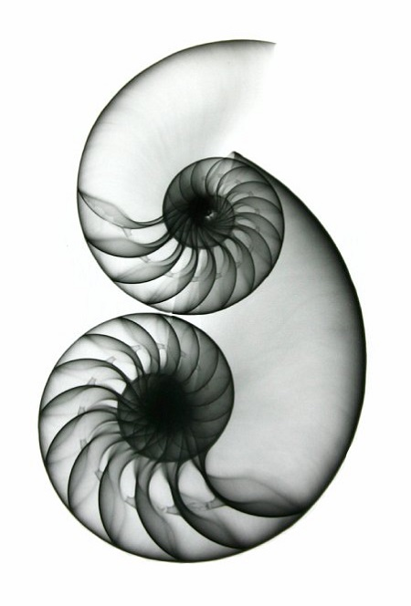 Albert's Shells were very popular from the beginning and appeared on television shows such as Will & Grace and were prominently displayed in department stores such as Nordstrom's.
