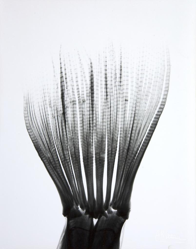 Fishtail L89