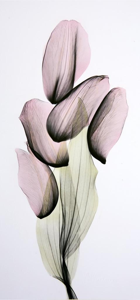 Tulip Composition L336 Color